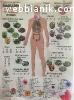 Билкови Смеси и БИЛКИ за всички болести с доставка за цяла Б