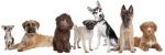 Обучение на всички породи кучета
